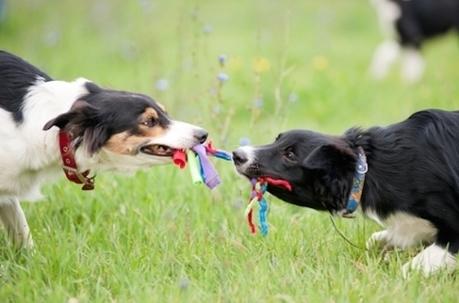 Xylitol : un édulcorant toxique pour les chiens | Toxique, soyons vigilant ! | Scoop.it