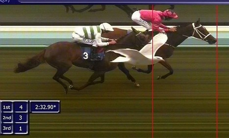 Second place... by a beak! Seagull beats horse into third place after it photobombs tight finish at Brighton race course | Horse Racing News | Scoop.it