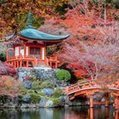 Kyoto blooms during cherry blossom season - Travel Weekly | My Japanese Garden | Scoop.it