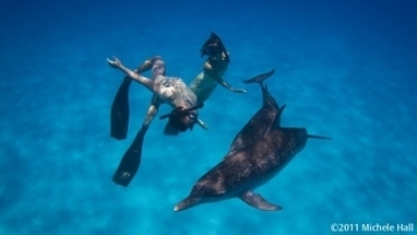 Howard Hall « We Dance With Dolphins | Dolphins | Scoop.it
