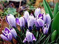 Bilder im Frühling | kostenlose-Bilder | Scoop.it