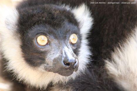 Una visita al zoo   Afán por saber   Scoop.it