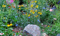 Xeriscape Your Yard | EcoWatch | Scoop.it
