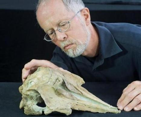 Fossil could be of ancestor of all modern dolphins, toothed whales | Geology | Scoop.it