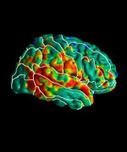 Prenatal Exposure to Insecticide Chlorpyrifos Linked to Alterations in Brain Structure and Cognition | News | Mailman School of Public Health | ISO Mental Health & Wellness | Scoop.it
