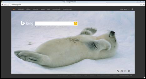 Bing   buscadores de internet   Scoop.it