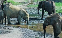 Tanzania: Twenty-One Officials Suspended Over Poaching Claims | Wildlife Trafficking: Who Does it? Allows it? | Scoop.it