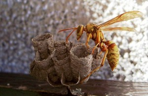 Lead Generation Tips – Don't Stir Up the Hornet's Nest - Business 2 Community | Leads from social media | Scoop.it