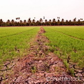 Action to improve soil for global food security - Cordis News | Environmental policy | Scoop.it