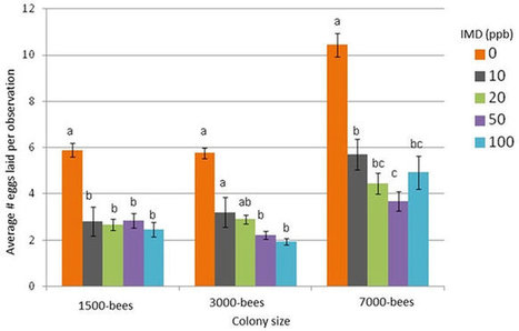 Sub-lethal effects of dietary neonicotinoid insecticide exposure on honey bee queen fecundity and colony development | La recherche en apiculture | Scoop.it