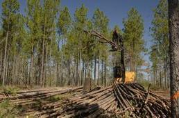 Singapore company buys 197K acres of timberland in Southern Oregon | Timberland Investment | Scoop.it