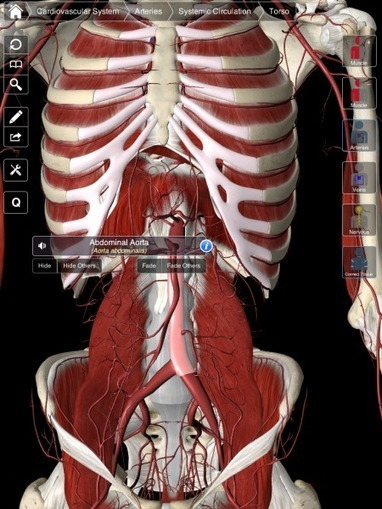 3D4Medical launch unique 3D essential anatomy app | Medical Applications | Scoop.it