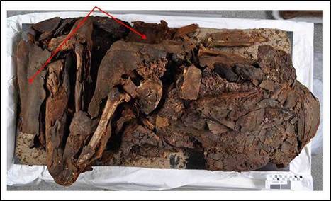 More about our Predynastic mummy | In the Artifact Lab | Egyptology and Archaeology | Scoop.it