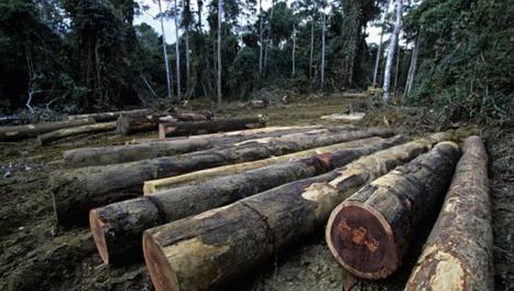 Bois illégal : l'UE et la FAO intensifient la surveillance de l'exploitation forestière | adiac-congo.com : toute l'actualité du Bassin du Congo | Confidences Canopéennes | Scoop.it
