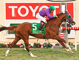 California Chrome Sparkles in Hollywood Derby | Horse Racing News | Scoop.it
