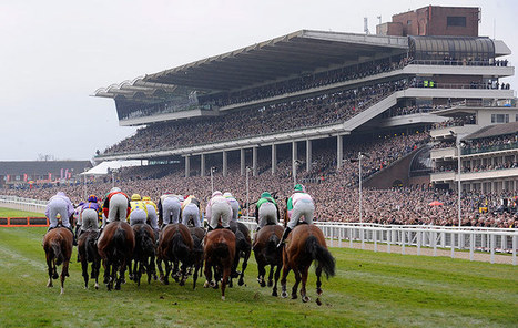 Why should you opt for Cheltenham hospitality packages ... | Hospitality | Scoop.it