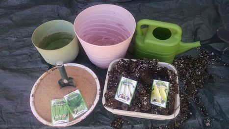 Arizona Gardeners: Vegetables grown in containers can be amazing | CALS in the News | Scoop.it
