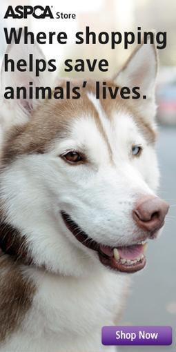 ASPCA | Fight Animal Cruelty | Dream Speeches | Scoop.it