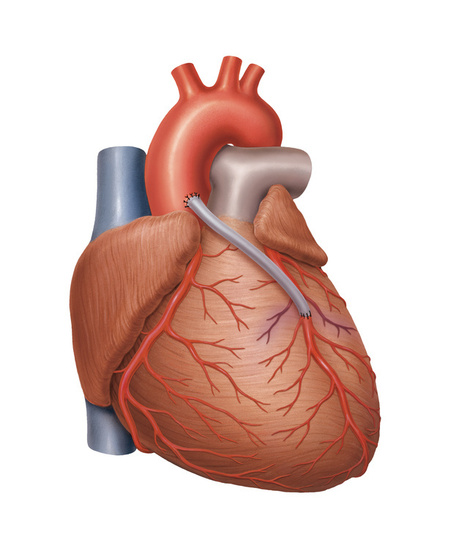 Serce grafiki | Grafika komputerowa | Scoop.it