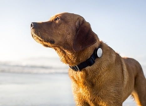 Yes, there is even Wearable Tech for your Dog | Technology in Business Today | Scoop.it