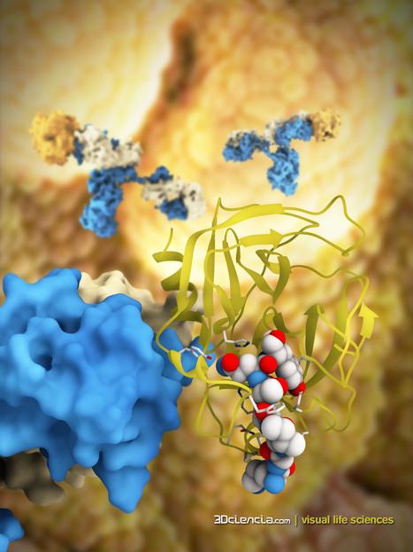Identifican una proteína ligada a la resistencia a fármacos contra el cáncer | The advances and progresses in the Science | Scoop.it