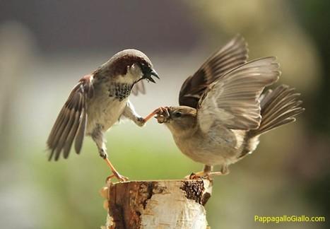 40 più belle foto degli animali presi al momento giusto - PappagalloGiallo.com   ANIMALI   Scoop.it