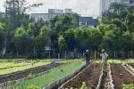 Urban Farming Movement Sweeps Across Havana, Cuba Providing 50% of Fresh Food | cuba | Scoop.it