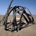 The 'mysterious' whale graveyard discovered in a desert | No Such Thing As The News | Scoop.it