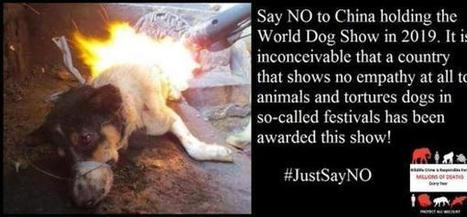 #SayNoTo2019ChinaWorldDogShow | Nature Animals humankind | Scoop.it