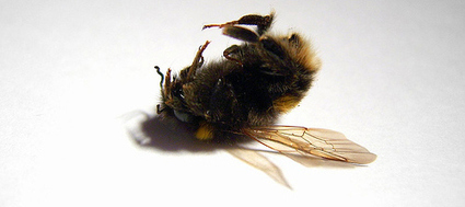 Robotic Bees to Pollinate Monsanto Crops | Cybofree : Techno Social Issues for a Postmodern Transhuman Society | Scoop.it