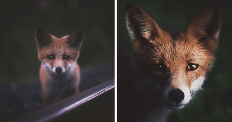 Photographer Captures The Soul Of The Forest With His Unbelievably Intimate Animal Shots | The Blog's Revue by OlivierSC | Scoop.it