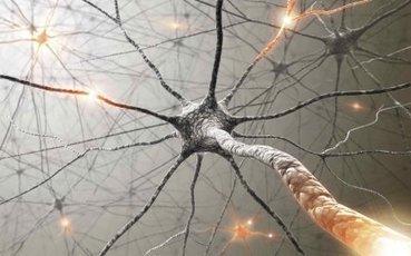 Notre vécu change l'anatomie du cerveau | Yves Dalpé | Coin du psy | Equi-coaching | Scoop.it