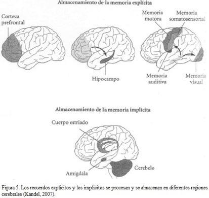 Plasticidad cerebral   Escuela con cerebro   Educacion, ecologia y TIC   Scoop.it