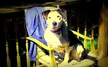 """""""She Cried While She Ate"""": Unchained Dog Overcome With Joy 