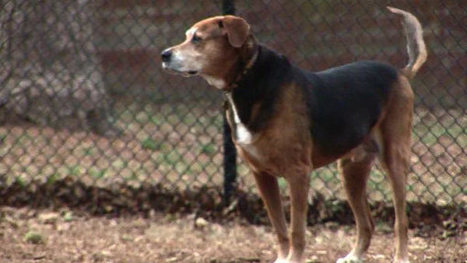 Dog owners should keep safety in mind at dog parks - FOX19 | Suburban Land Trusts | Scoop.it