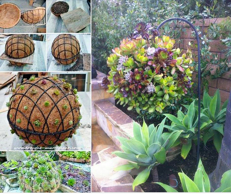 Create a succulent ball | Gardening Life | Scoop.it