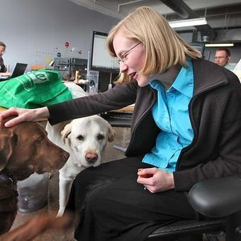 More companies, citing benefits, allow pets at work | Pet News | Scoop.it