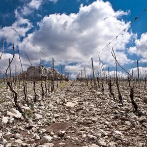 Bargylus et Marsyas : des vignobles et des guerres | Charliban Lebnen | Scoop.it