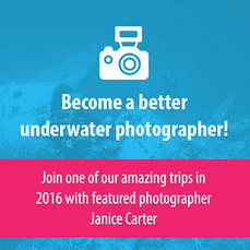 Join us and Become a Better Underwater Photographer in a Week | Bookyourdive | Scoop.it