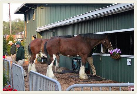 2013 Preakness Stakes Week - 2013 Triple Crown - Photo Galleries | HRTV | Horse Racing News | Scoop.it