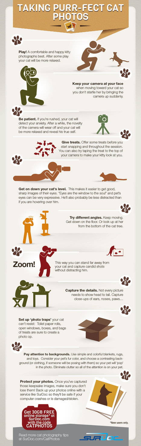 7 Steps to Taking Purfect Cat Photos [INFOGRAPHIC] | Adobe Illustrator Tutorials | Scoop.it