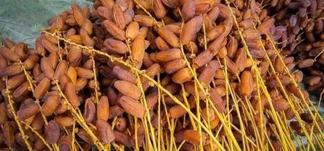 La Tunisie, 2e exportateur d'Afrique de produits bio | Actualités Afrique | Scoop.it