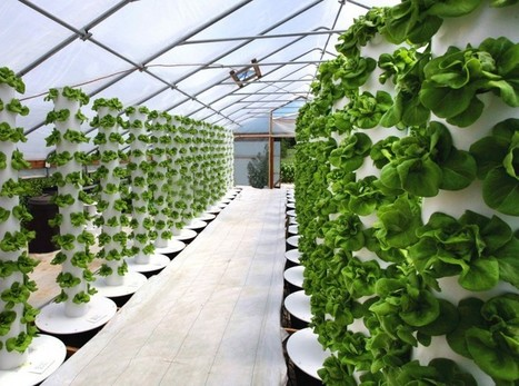 Six Mega-Trends in Indoor Agriculture - AgFunderNews | Better Mobility, Living, Logistics, Infrastructure | Scoop.it