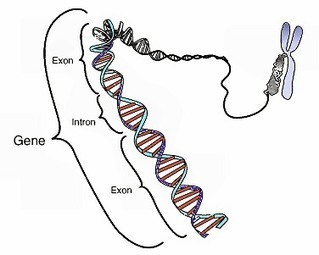 Rett syndrome may result from overexpression of long genes | Rett syndrome and breathing difficulties | Scoop.it