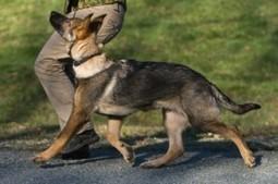 German Shepherd Training | German Shepehrd Dogs | Scoop.it