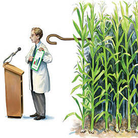 Do Seed Companies Control GM Crop Research? -  Scientific American | YOUR FOOD, YOUR HEALTH: #Biotech #GMOs #Pesticides #Chemicals #FactoryFarms #CAFOs #BigFood | Scoop.it