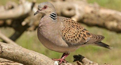 Bonne nouvelle pour les oiseaux migrateurs : Deux accords mondiaux historiques viennent d'être conclus en leur faveur - LPO | Le flux d'Infogreen.lu | Scoop.it