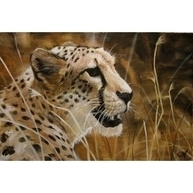 Cheetah - Realistic Oil Painting | acrylic painting | Scoop.it