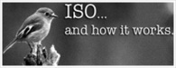 ISO 50001 Certification Services Jaipur, Consultant For ISO 14001, HACCP / ISO 22000 Certification Agency For ISO 9001 Jaipur | Halal Certification India | Scoop.it