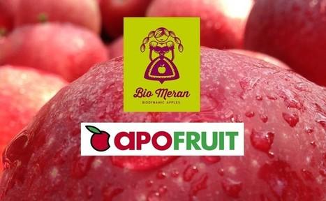 Mele biodinamiche. Partnership Apofruit e Bio Meran | myfruit - frutta e verdura | Scoop.it